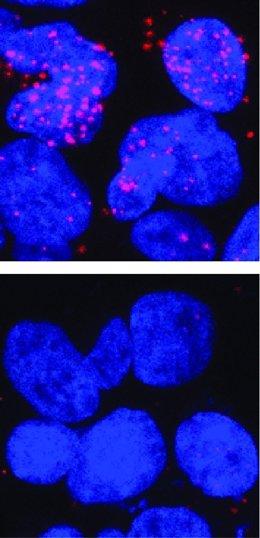 En vermell, interaccions abans i després d'eliminar una regió d'una proteïna