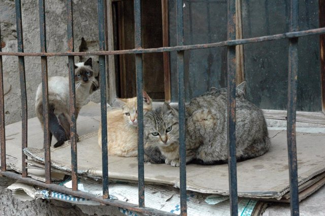 Gatos, gato, animal, mascota