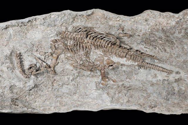 Esqueleto de Rhaeticosaurus
