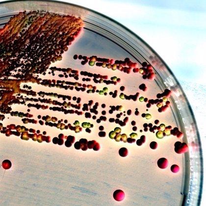 Descubren secretos sobre el sexo de los hongos que aportan nueva luz a la candidiasis
