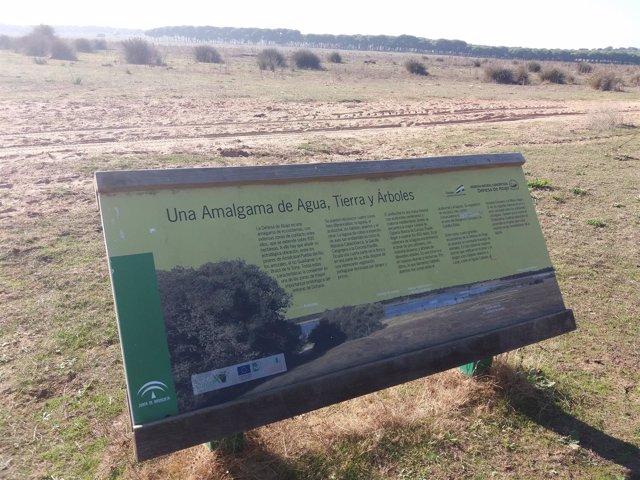 Imagen de la Dehesa de Abajo, en en entorno de Doñana