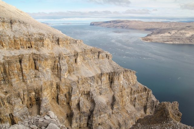 Roca con plantas fósiles