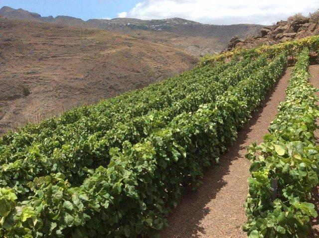 Cultivos en Canarias