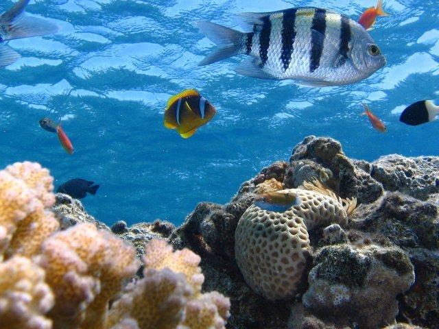 Peces vida marina. Océanos