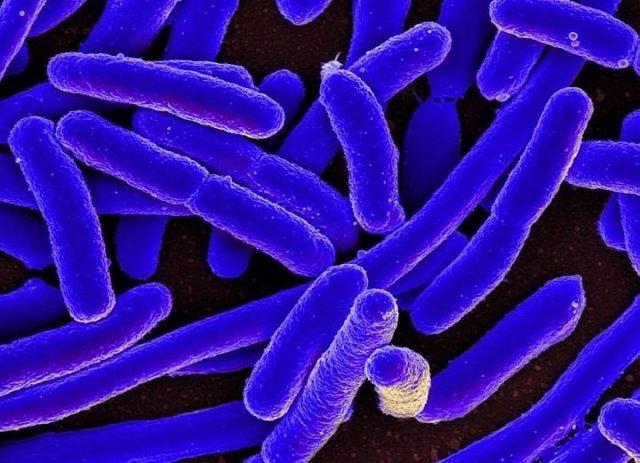 Bacteria e.Comli