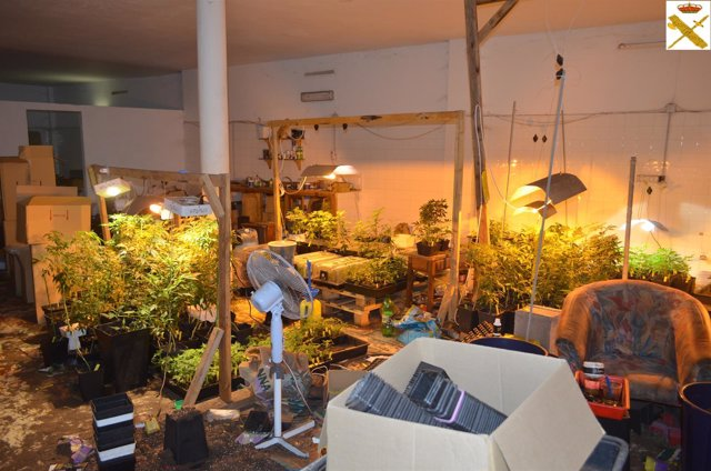 El laboratorio de cannabis sativa que el detenido tenía en casa