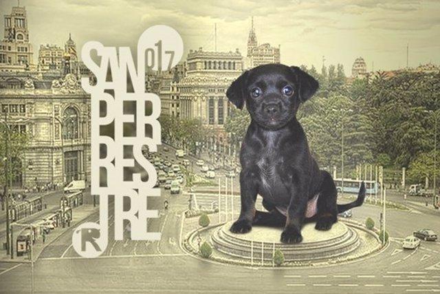 Cartel de la 'San Perrestre' 2017