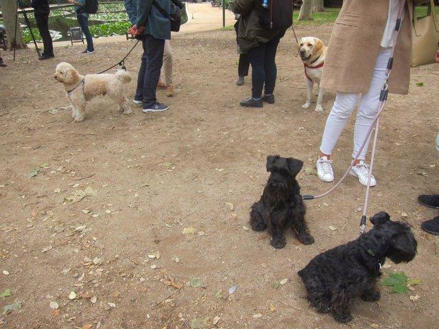 Vecinos con perros en el Turó Park
