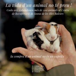 Campaña del Govern contra el abandono de animales