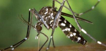 España suma 325 casos de Zika desde 2015, pero sólo 2 fueron infecciones autóctonas