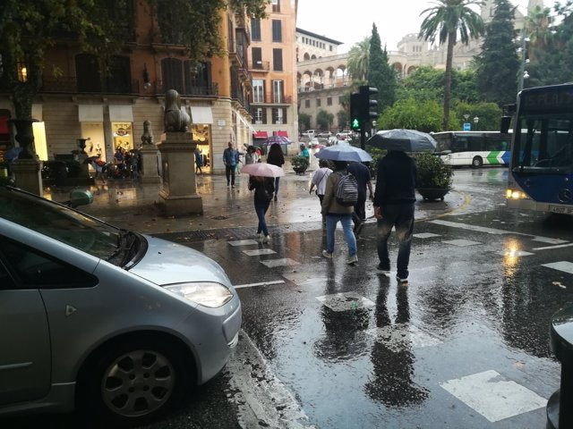 Lluvia, Palma, paraguas, tiempo, llover