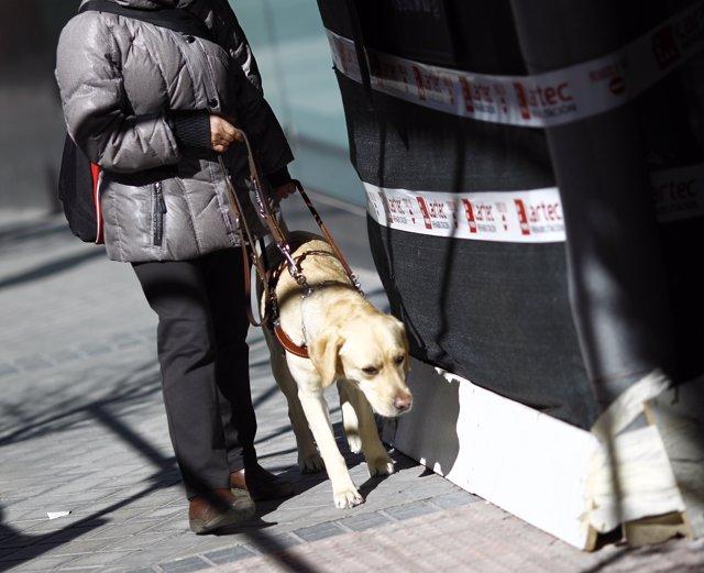 Discapacitat, discapacitat, cec, persones cegues amb gos pigall, lazarillo