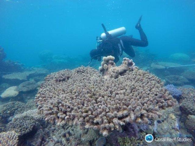 Investigación del coral