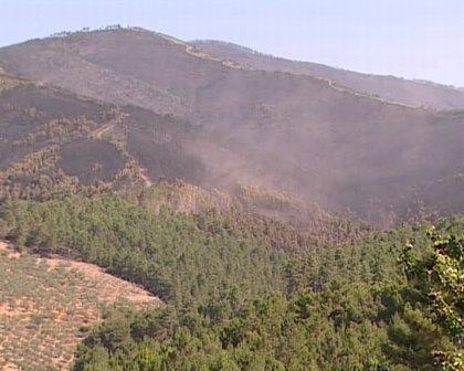 El Gobierno regional convoca la contratación de tratamientos selvícolas para regenerar masas forestales en Las Hurdes