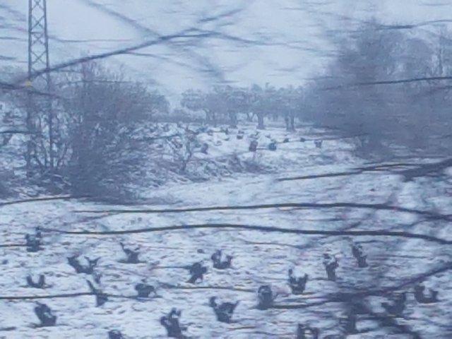 Temporal de nieve.