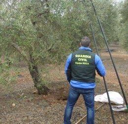 Un agente de la Guardia Civil en una de las fincas donde se ha robado aceituna.