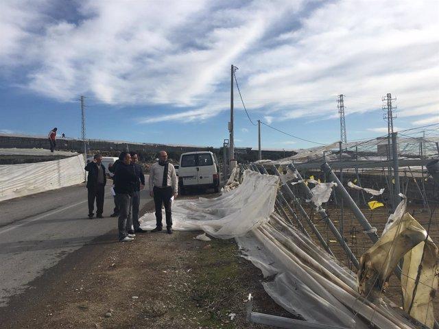 Uno de los invernaderos destrozado por el tornado