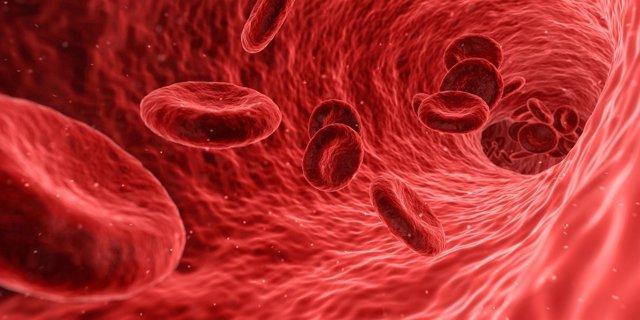 Arterias, sangre