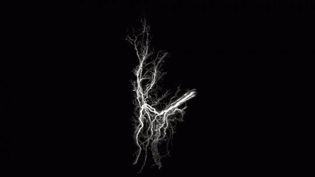 Arquitectura de las proyecciones neuronales dentro del tejido graso