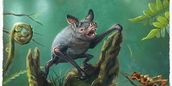 3. Restos de un murciélago gigante extinto aparecen en Nueva Zelanda