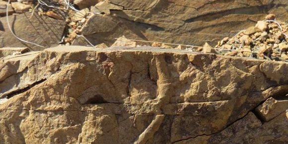 7. Restos fósiles 8 metros bajo el lecho marino, nuevo límite para la vida
