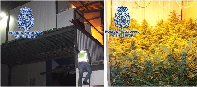 Imagen de la nave y de la plantación de marihuana