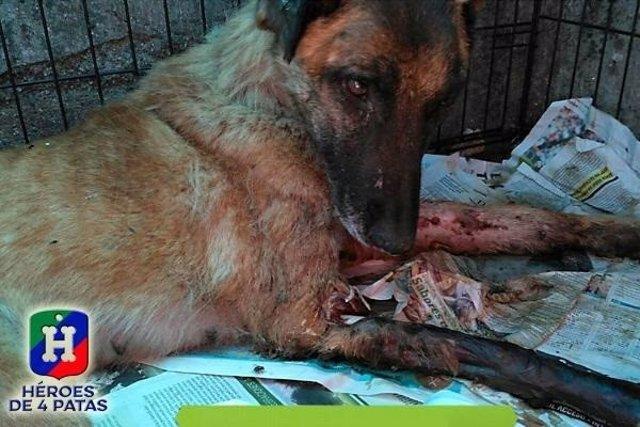 Vespa, una perra que sirvió en Protección Civil busca familia que la adopte
