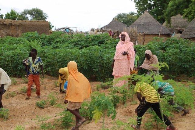 Huerto escolar en Níger