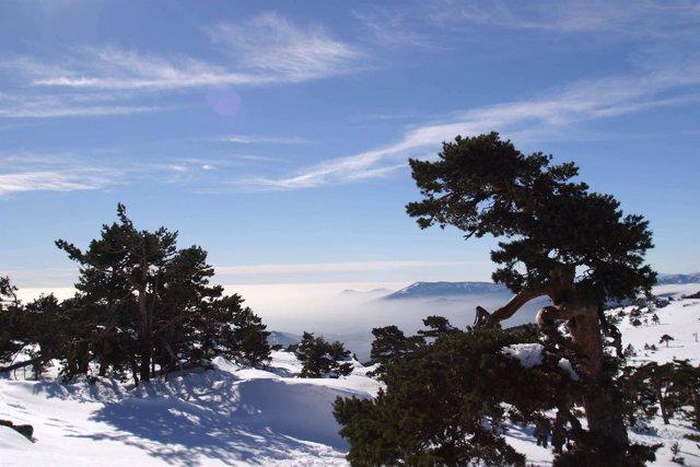 Navacerrada. Sierra De Guadarrama.