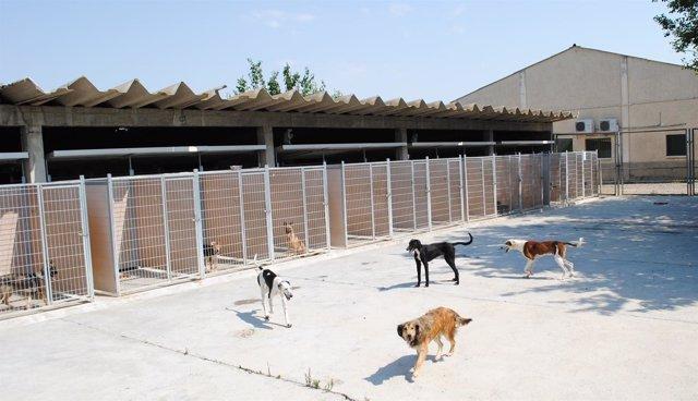Instalaciones del Centro de Protección Animal de la DPZ en Movera