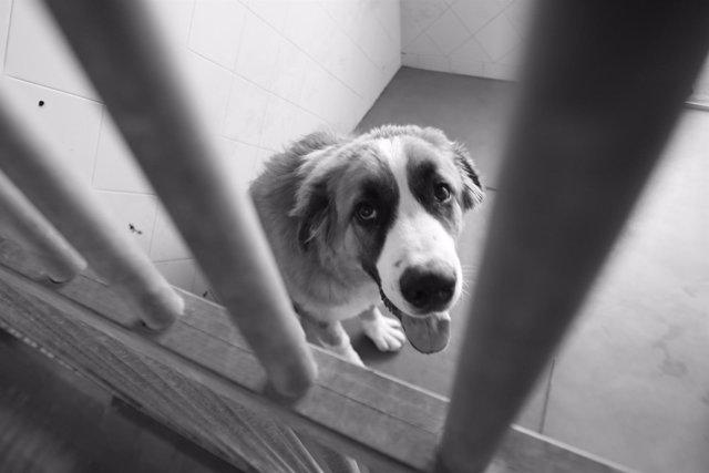 La entrada de perros en Son Reus baja un 7% aunque aumenta un 32% la de gatos en 2017