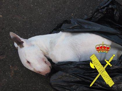 Investigan a un hombre en Oviedo por matar a un perro y maltratar a otro
