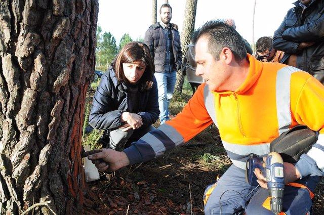 Ángeles Vázquez en una visita a un proyecto sobre la extracción de resina