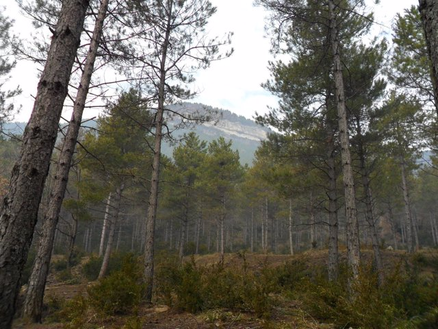 Bosque, monte