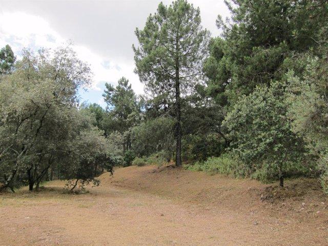 Paraje del Parque Periurbano de Los Villares