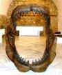 Foto: Una muestra de fósiles en Badajoz incluye la reproducción de la dentadura de un tiburón megalodón de 2 metros de altura