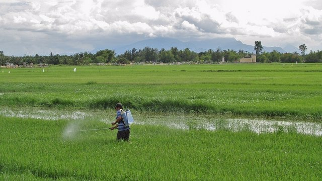 Pesticidas, campo de arroz
