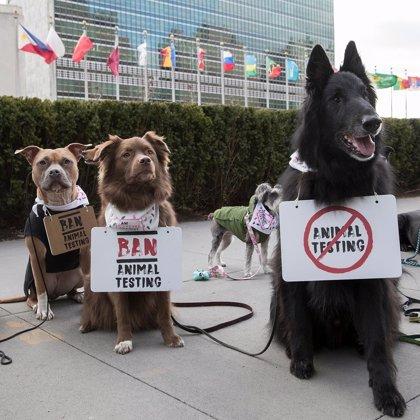 The Body Shoy y Cruelty Free International piden a la ONU que ponga fin a la experimentación de cosméticos en animales