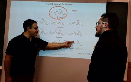 Científicos españoles buscan aplicación médica a un alga invasiva en Turquía