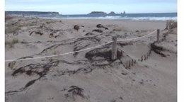 Estado actual de las dunas en Torroella de Montgrí