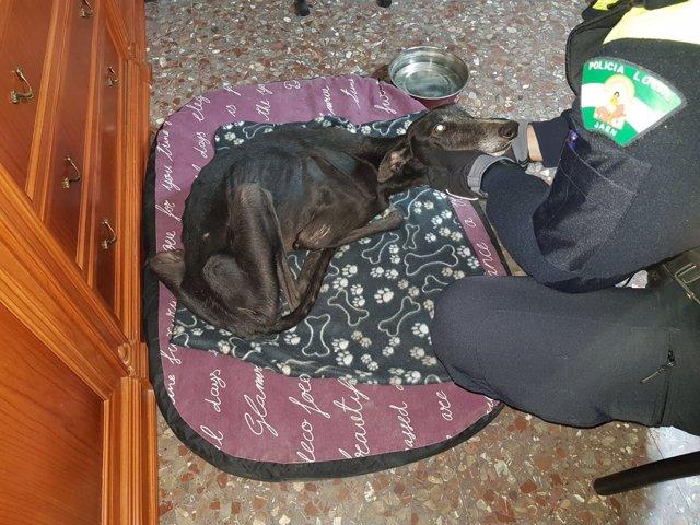 Un agente acaricia al galgo encontrado en estado famélico en Jaén.