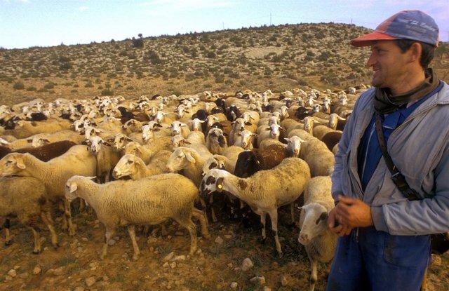El Consell favorecerá el pastoreo para prevenir incendios forestales