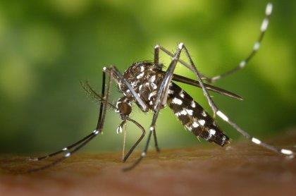 Si aplastas a los mosquitos, pueden aprender a evitar tu olor