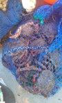 Foto: Intervenidos casi 200 kilos de marisco en controles en A Illa de Arousa y en la Ría de Pontevedra