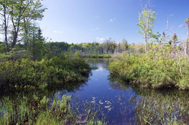 Lago donde se extrajo polen fosilizado para el estudio