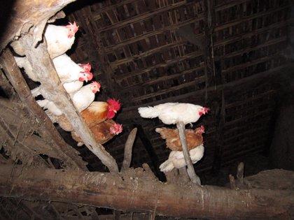El acusado de matar a varias gallinas en Canjáyar fue captado por una cámara de seguridad