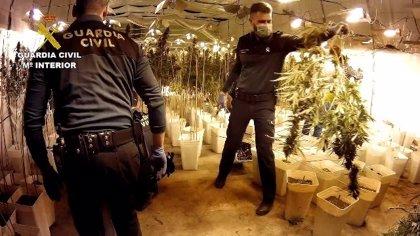 Desarticulado un grupo que cultivaba 12.000 plantas de marihuana en naves industriales en Chiva (Valencia)