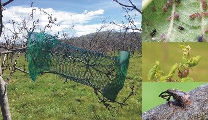 Una investigación evidencia el papel beneficioso de las aves para el manzano de sidra