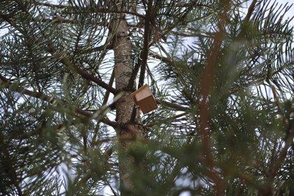 """Torrevieja instala nidos para """"salvar"""" a los gorriones ante la desaparición de los tejados tradicionales"""