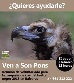 Fundación Vida Silvestre Mediterránea